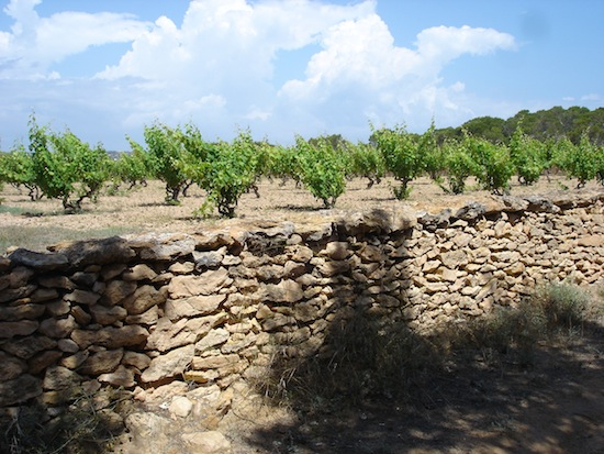 Bodegas de Ibiza y Formentera