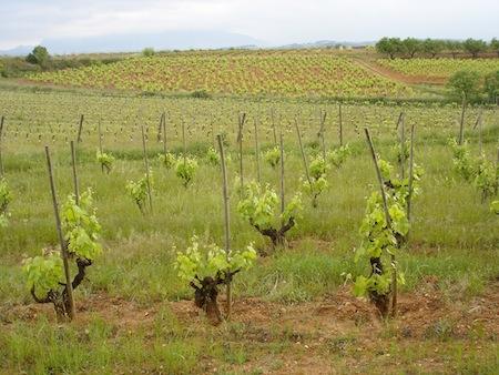 Distintos tipos de trabajo en el viñedo