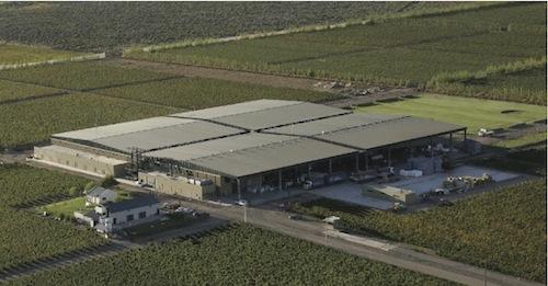 Y construyeron la bodega de 17.000 metro cuadrados y con capacidad para 8 millones de litros