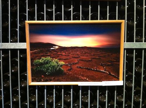 fotos de viñedos por-cristina-alcala
