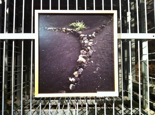 Exposición fotográfica de viñedos