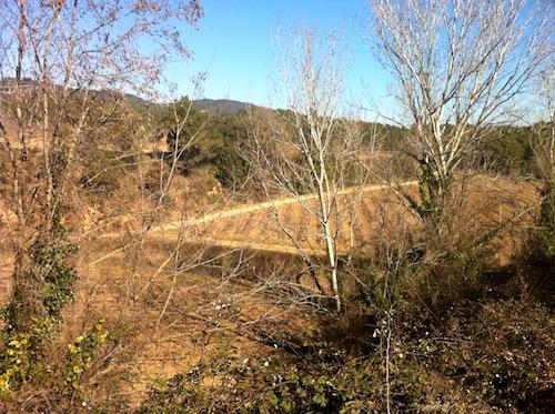 Una de las  parcelas del Reserva Real foto-por-cristina-alcala