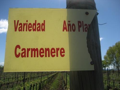 Carmenérè, símbolo de Chile foto-por-cristina-alcala