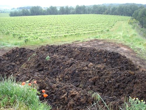 Compost en los viñedos de Recaredo foto-por-cristina-alcala