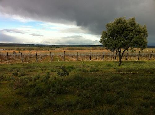 Viñedos de Bodegas Menade en Rueda foto-por-cristina-alcala