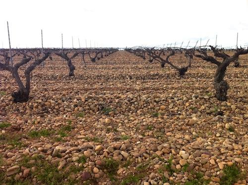 Iniciarse en los vinos de Rueda