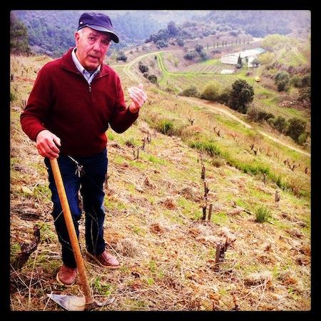 Francesc Capafons-Ossó trabajando la viña