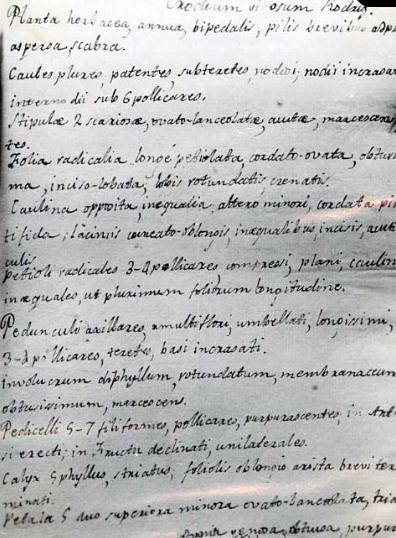 Caligrafía Clemente de Rojas