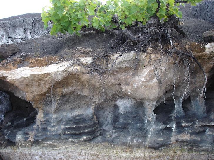 Perfil de suelos de Lanzarote-foto-cristina-alcala