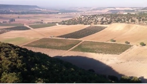 Viaje en globo entre viñedos (video)